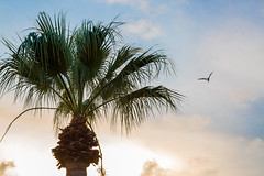 Palm Sky (Dylan Childs) Tags: coast beach ocean sea rockport texas canon 5d palm tree tropical sunset gulf