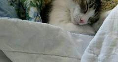 Nap time via http://ift.tt/29KELz0 (dozhub) Tags: cat kitty kitten cute funny aww adorable cats