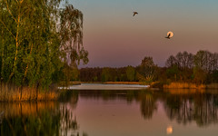 Birds of twilight islands (piotrekfil) Tags: nature landscape water waterscape lake island twilight dusk sunset birds trees reflections moon moonrise pentax poland piotrfil dawn