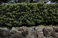 20160930_DP0Q5739 (NAMARA EXPRESS) Tags: street wall plant rock fine outdoor color foveonclassicblue toyonaka osaka japan foveon sigma dp0 quattro wide ultrawide superwide namaraexp