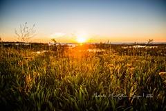 20160828-IMG_7761-WM (Pamela McLellan Zmija) Tags: saugeenshores portelgin sunset beach lakehuron pamelamclellanzmija goblesgrove sunshine