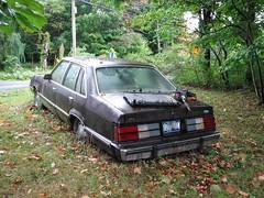 1984 FORD LTD (richie 59) Tags: ulstercountyny ulstercounty newyorkstate newyork unitedstates weekend fordmotorcompany ford saturday richie59 outside summer townofplattekillny townofplattekill 2016 sep2016 sep102016 1984fordltd 1984ford 1984ltd fordltd ltd america 2010s americancars uscars 4door 4doorsedan fourdoor fourdoorsedan 1980scar backend taillights automobile auto motorvehicle vehicle car fordsedan fomoco browncar hudsonvalley midhudsonvalley midhudson nystate nys ny usa us oldcar oldford oldsedan oldrustycar rustyford trees frontyard grass weeds yard foxbodyford foxbody sinkinginfrontyard sinking