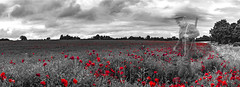 We Will Not Forget You (john_spreadbury) Tags: ww1 soldier blacknwhite blackwhite gun britsih army poppy poppies field england ghost ghostly armed forces poppyday remembrance