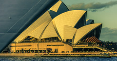 Swallowed (Myrialejean) Tags: opera operahouse nikon d7200 sydney australia curves shells ship boat cruise water sea waves people tourists bow lines geometry carnivalspirit windows sightseers ridge blue yellow evening sunset warm outdoors architecture design modern sail transport culture