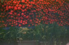 (bezhetskaia) Tags: old film 35mm fed2 filmcommunity analog lomo autumn red people