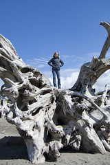 """Queen of the Driftwood • <a style=""""font-size:0.8em;"""" href=""""http://www.flickr.com/photos/45335565@N00/7491741338/"""" target=""""_blank"""">View on Flickr</a>"""