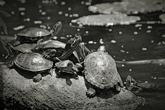 The Castaways (Ivn Adrin) Tags: sol castaway agua turtle shell tortuga caparazon naufragos