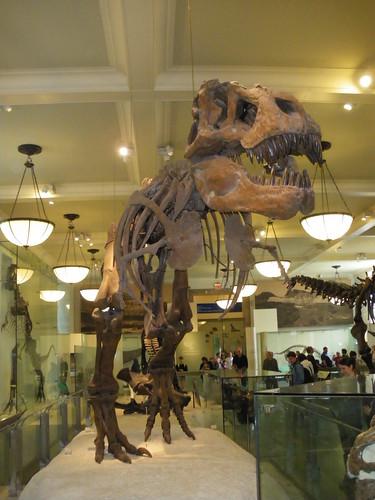 Musée américain d'histoire naturelle_10