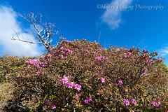 Harry_04667,,,,,,,,,,,,, (HarryTaiwan) Tags: nationalpark taiwan     sheipa         sheipanationalpark    xueshan  syuemountain             harryhuang xuemountain hgf78354ms35hinetnet