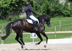 IMG_0035 - Arnac-Pompadour (19) (Lumire-du-matin) Tags: horses horse nature animal canon caballo cheval pompadour pferd chevaux cso eventing quitation haras 50d 200mmf28l ef200mmf28liiusm gestt