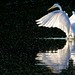 An egret dance at sundown...