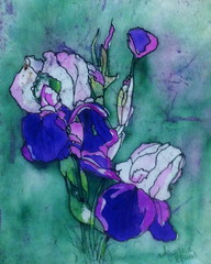 Iris Softness -watercolor