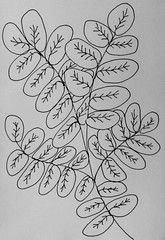 Leaves in Black and White (randubnick) Tags: stilllife tree art leaves pattern drawing sketchbook painter iphoto sharpie penandink digitallymodified digitalpastel woodcuteffect