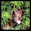 """Hershey hiding in the brush • <a style=""""font-size:0.8em;"""" href=""""http://www.flickr.com/photos/77680067@N06/7714947396/"""" target=""""_blank"""">View on Flickr</a>"""