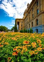 Legislature Sunshine (Matthew P Sharp) Tags: summer flower sunshine yellow edmonton sunny alberta government legislature