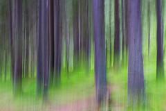 Breath of trees (Sinthonia) Tags: trees colors alberi natura colori dolomity