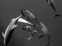 More of Leina (bodiver) Tags: hawaii blackwhite dolphin ambientlight wideangle fins naia honaunau underwatermodel