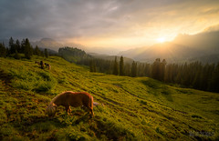 * Sunset pony * (dmkdmkdmk) Tags: sunset horse mountains alps nature animals landscape switzerland evening nikon swiss pony hdr d800 silberen pragelpass muothatal silberenkarstmuothatalpragelpasssonnenuntergangpferdpony