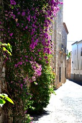 (Portal of Imagery) Tags: flowers summer streets spain alleys inbloom