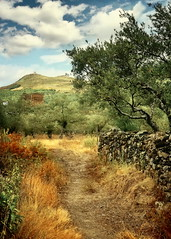 ... through olive groves (kypt@nuy ~ very busy!!!) Tags: trees summer color photoshop spain nikon rboles camino herbs path olive verano dried olivos cceres groves vereda olivares extremadura cadalso hierbas sierradegata d5100 kyptnuy magicunicornverybest magicunicornmasterpiece helenamanso laalmenara