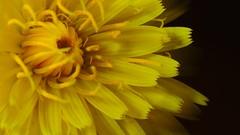 Daisy (Muchos insectos) Tags: macro nature nikon tamron extensiontubes sp60 sb700 extenesiontube