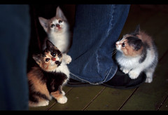 That Giant Above Us. (Graldine Hofmaier) Tags: from above wood light cats cute feet cat giant that religious foot us wooden iceland paw eyes kitten chat pants south religion kitty it tortoiseshell actually whiskers want jeans what does paws supernova cuteness cateyes geraldine overload islande glowy icelandic chaton slakki cutenessoverload laugaras geraldinesupernova thatgiantaboveus whatdoesitactuallywantfromus hofmaier geraldinehofmaier prismographie prismography