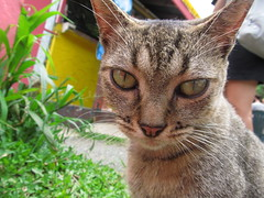 cat (h@nn@h$3d|@k) Tags: summer cat puerto eyes kitten o puertorico c kitty s rico whiskers greeneyes sooc straightoutofcamera