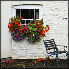 Talybont-on-Usk (Cathy F..) Tags: window bench box geranium talybontonusk