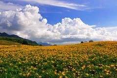 Sea of Lily Flowers@ (Vincent_Ting) Tags: sky star taiwan daylily  formosa  sunrays  milkyway hualian    hemerocallisfulva       clousd   starstrails
