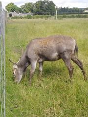 Fife Deer Park v8 (McColl Family) Tags: st inn andrews peat pittenweem monans