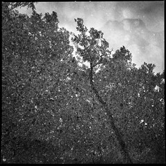 .asphalt.wilderness. (VisualLifeLine) Tags: trees abstract film analog zeiss concrete exposure experimental kodak tmax double cm hasselblad 100 28 500 wilderness rodinal asphalt planar 80mm