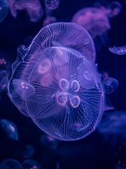 Mduse / Jellyfish (Cpt_Love) Tags: 2016 paris fish mduse jellyfish olympus pen penmini epm2 olympuspenepm2 sigma30mmf14 shotbycptlove 43 mu43 m43 profondeurdechamp eau aquatique texture brillant micro43
