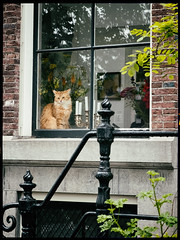 DSCF6694 (Kruijssen) Tags: fujifilm x30 window raam kat cat animal gracht amsterdam glas street straat