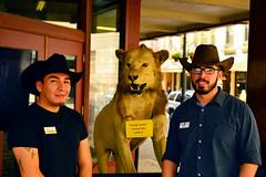 Don't touch the lion (radargeek) Tags: sanantonio tx texas downtown lion cowboyhat