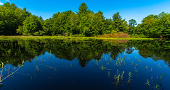 Mirrored Shoreline (Catskills Photography) Tags: odc beginswithm pond reflections landscape wideangle summer water canon1022mmlens