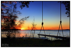 The Old Tree Swing (juliewilliams11) Tags: photoborder outdoor waterfront serene sunset dusk water sky swing newsouthwales australia smoke tree bay