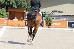 IMG_7166 (dreiwn) Tags: dressage dressur dressuur pferd reitturnier turnierreiten pferdesport horse horseback horseriding equestrian reitverein dressurprüfung kandare doublebridle reiten pferde reitplatz ridingarena