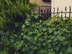 2016/08/22 #9 # # (haphopper) Tags: 2016 typhoon rain storm stormy weather leaves green nofilter naturalfilter instagram photo japan ibaraki ishioka     9     watery water car window