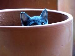 mischievous cat (Val Falffield) Tags: cat babycat
