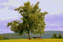 a place to dream (laura.foto) Tags: tree green germany schwartzwald blackforest bench hills valley landscape