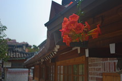 Bukchon hanok village (Mathieu Sanchez) Tags: coree bukchon fleur village
