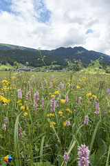 Colourful (HendrikMorkel) Tags: austria bregenzerwald family sonyrx100iv vorarlberg sterreich mountains alps alpen berge barfusswegbizau barefoottrailbizau