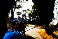 r i d e (mmmmarta93) Tags: airelibre moto parquenacional holanda arnhem hoge veluwe motorcycle sun movimiento
