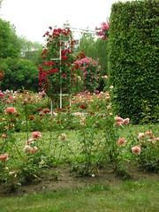Petrin Hill Rose Garden (Yoav Lerman) Tags: roses rose garden prague hill petrin גבעת lerman גן פראג ורד ורדים לרמן פטרין