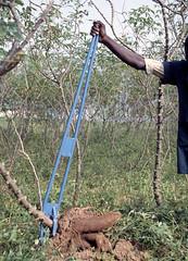 Manual cassava harvester (IITA Image Library) Tags: harvesting cassava fieldworkers manihotesculenta manualharvesters