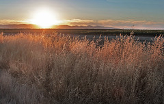 Kiss Goodnight (skipmoore) Tags: sunset grass explore allendale solanocounty