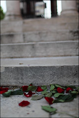The Morning After (Beau Bye) Tags: concrete steps staircase rosepetals londonengland canonef35mmf14l canoneos5dmarkii
