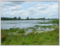water meadow (Isisbridge) Tags: uk england english water thames river flood britain meadow july oxford british common grassland oxfordshire 2012 portmeadow wolvercotecommon