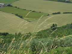 Green bands (Nekoglyph) Tags: trees green grass rural countryside view yorkshire hill fields crops whitehorse kilburn