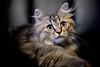 Kitty (Pai Shih) Tags: animal cat kitty flickraward5 flickrawardgallery gettyimagestaiwan12q3